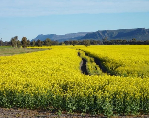 The view towards the Grampians from Wal Wal Road and Fishers Road near Taylors Lake, Horsham. Courtesy of Travel Victoria.